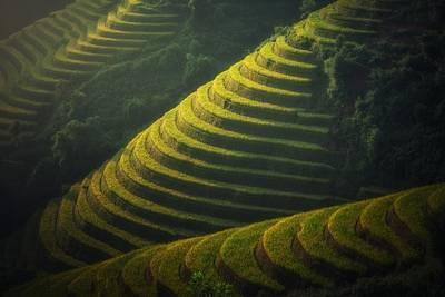 ベトナムの段々畑