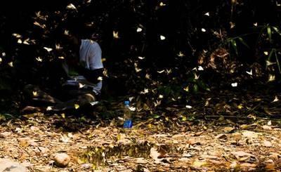 ケーンクラチャン国立公園・蝶が舞っているところ