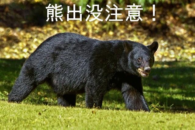 f:id:nezujiro:20180510154305j:plain
