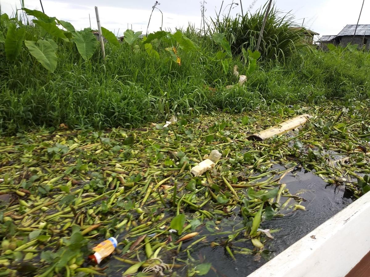 湖上にホテイアオイが繁殖している様子をボート上から撮った写真