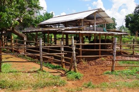 ミャンマーの牛舎