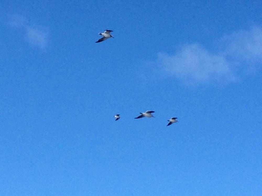 高く飛ぶ鳥たちのイメージ写真