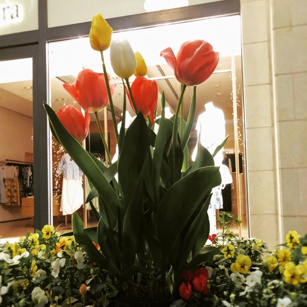 きれいに咲く花たちのイメージ