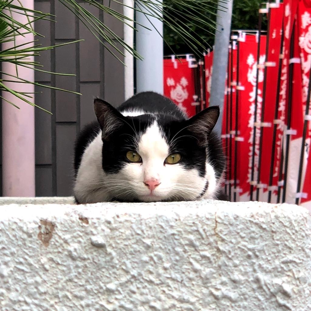 見つめる猫のイメージ