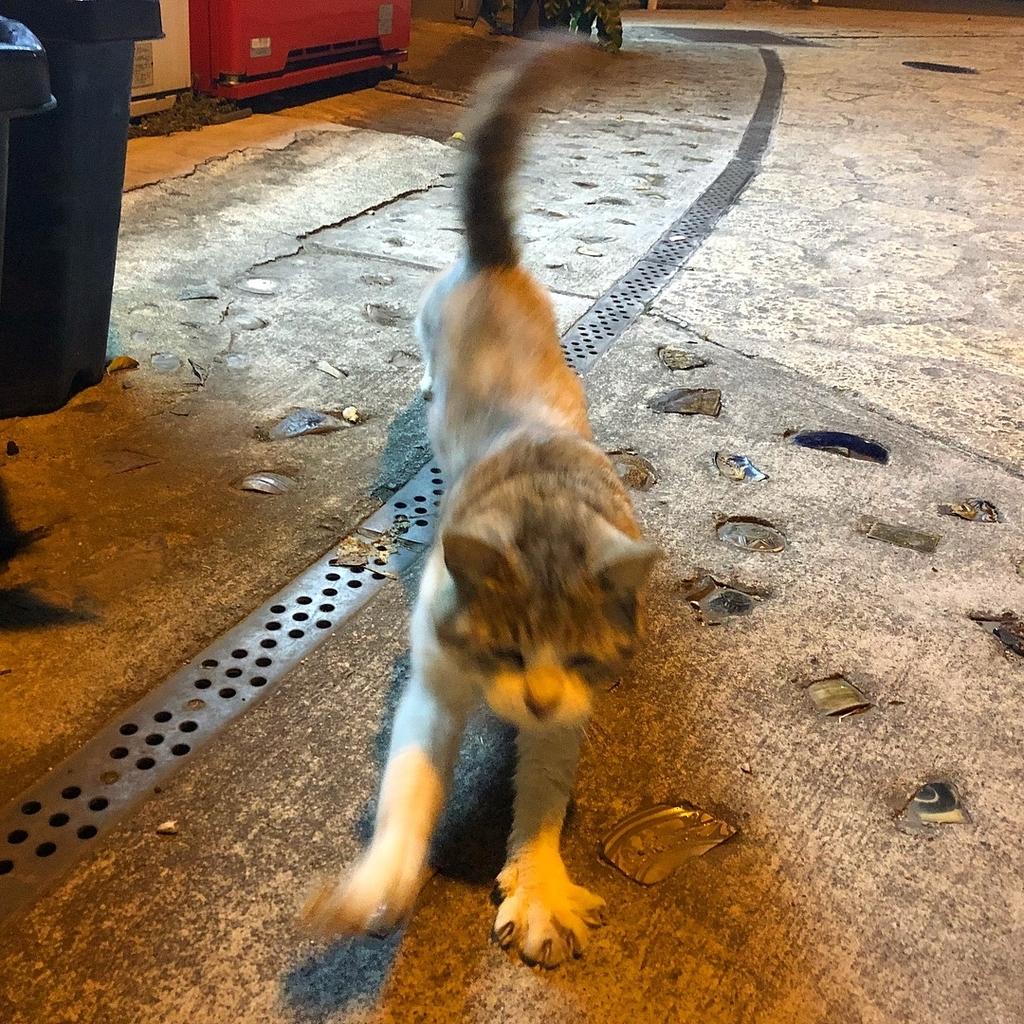 走り出す猫イメージ