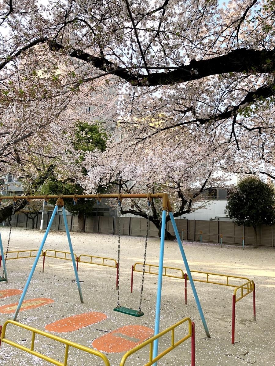 校庭の桜とブランコ写真