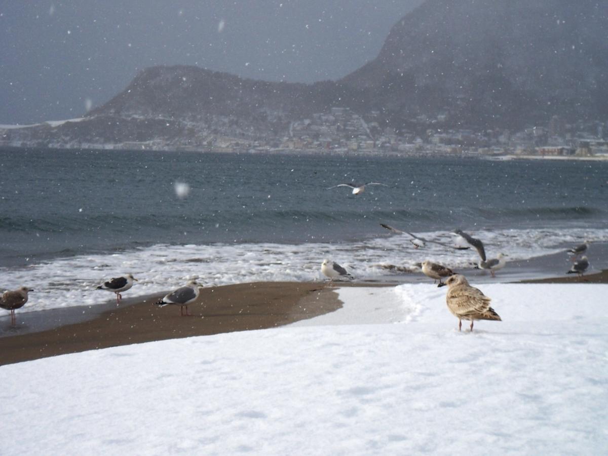 雪と海と鳥イメージ