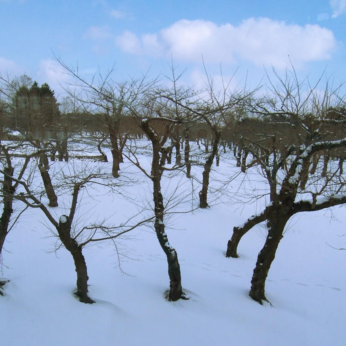 実のなっていない雪の中の枯れ木のイメージ