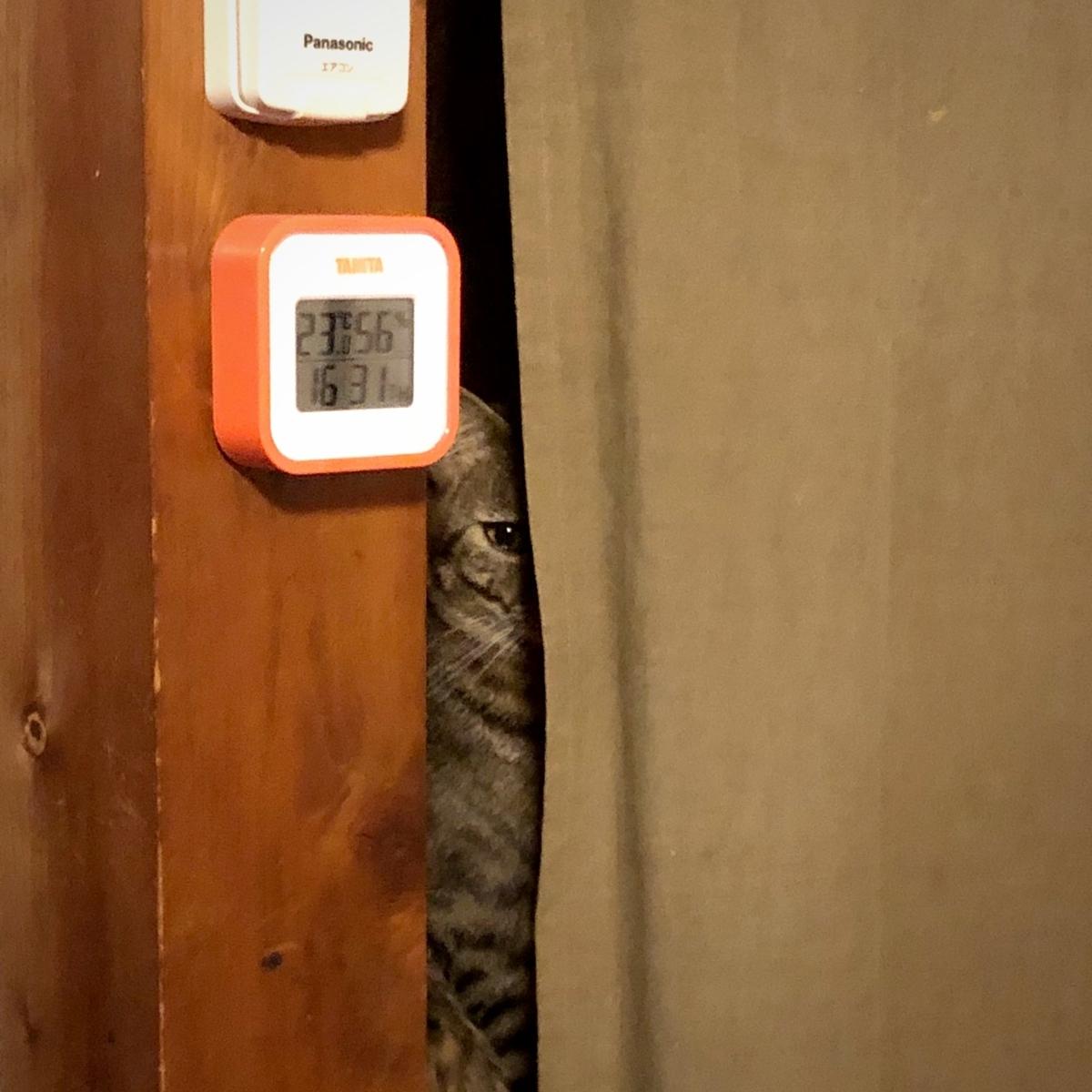 チラリと見える猫のイメージ