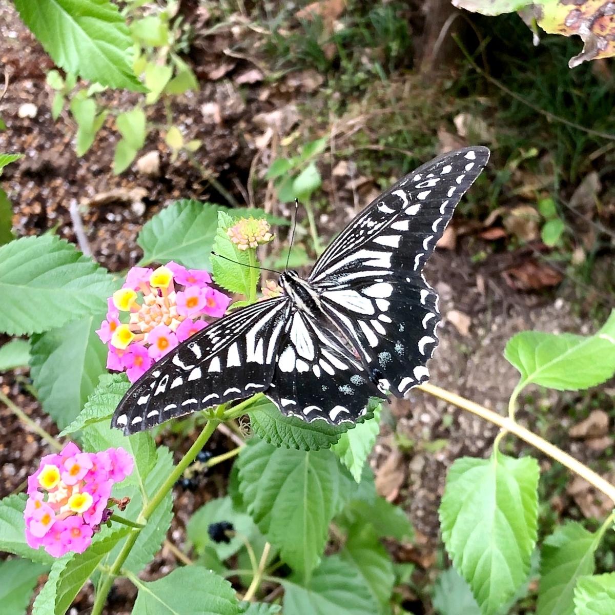 蝶の羽効果