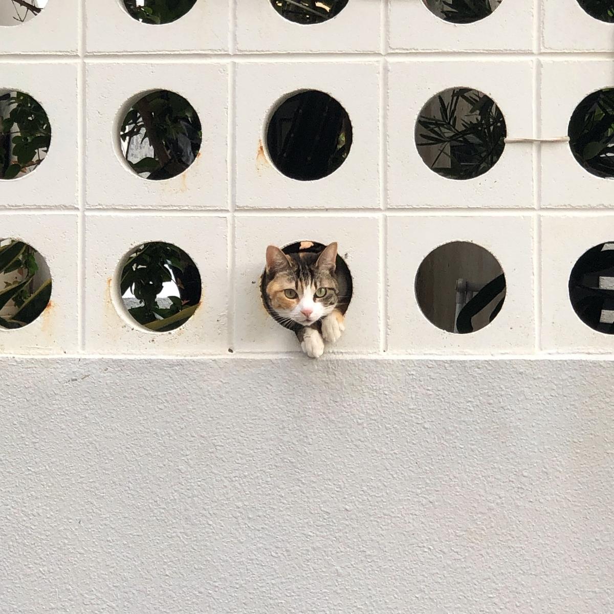 猫見つけたのイメージ