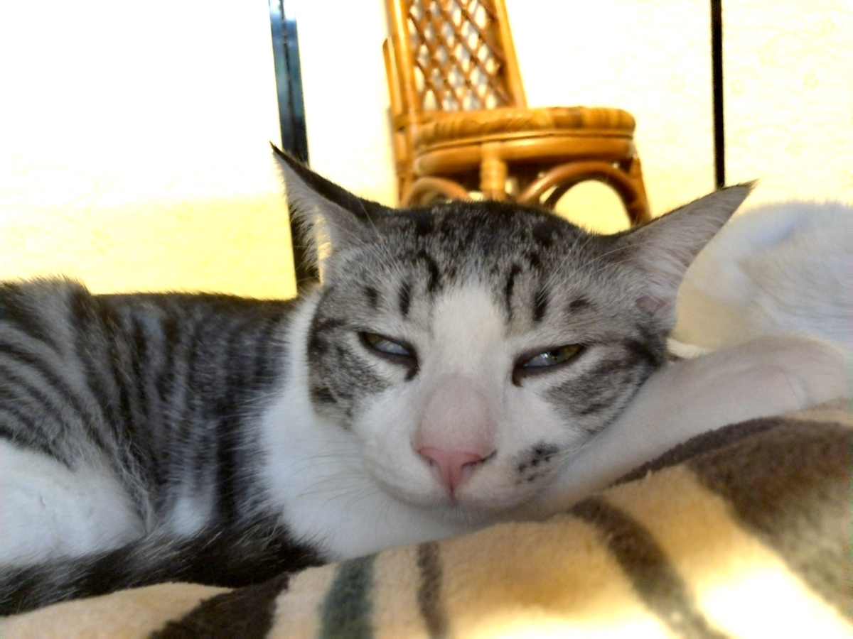 可愛い子猫のイメージ