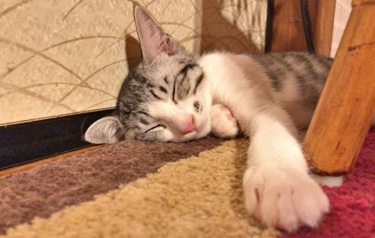 熟睡する子猫イメージ
