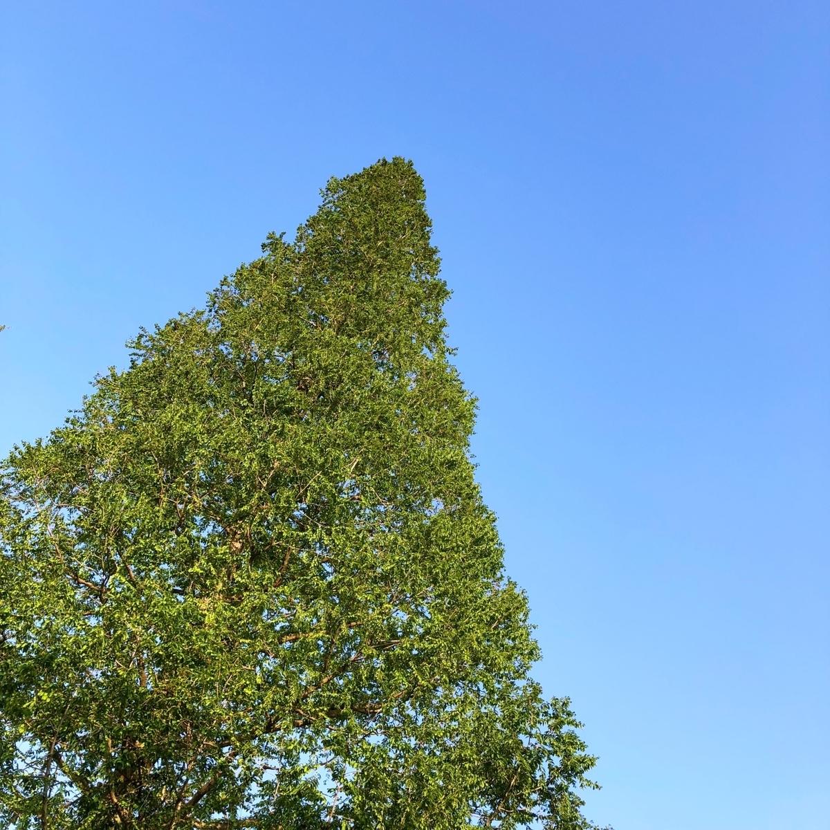 天高く伸びる木のイメージ