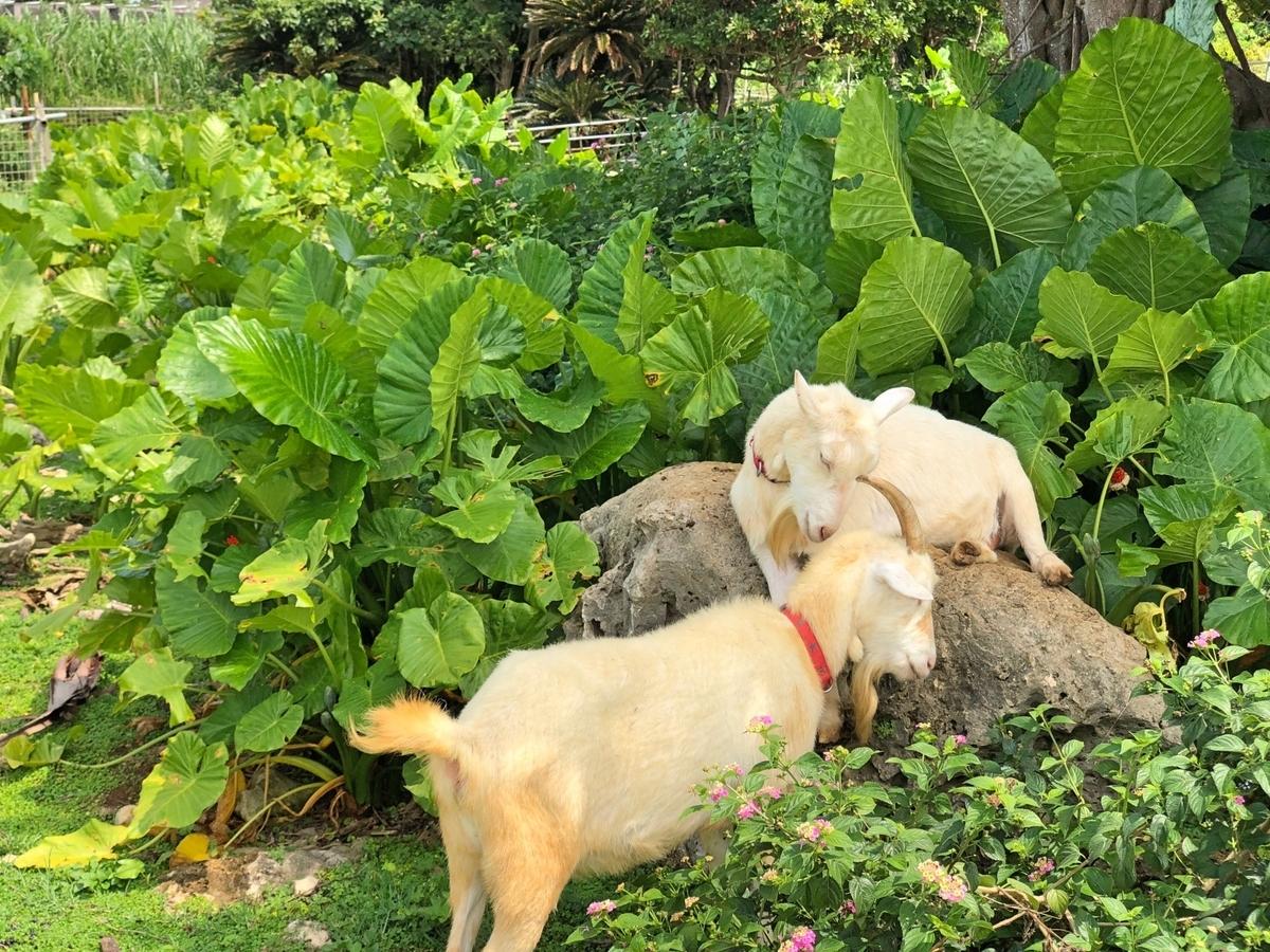 お互いを気遣うヤギのイメージ