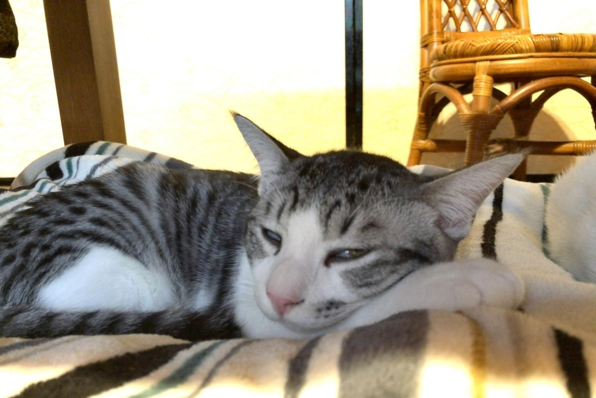 リラックスして眠る子猫イメージ