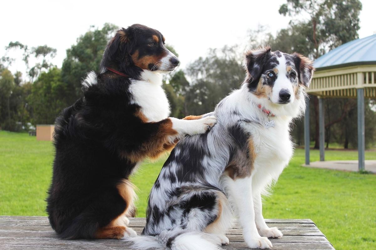 マッサージする犬のイメージ(SpiritzeによるPixabayからの画像)