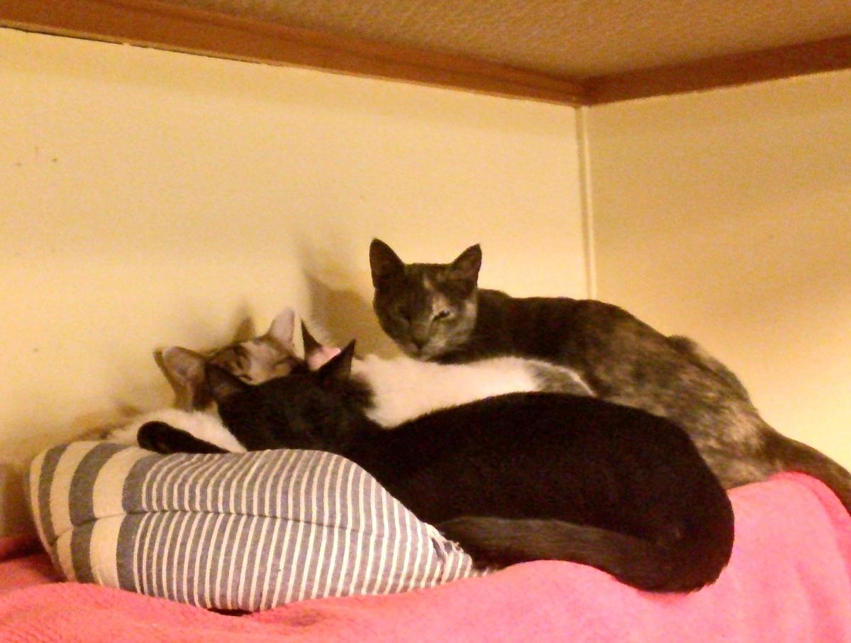 4匹の猫イメージ