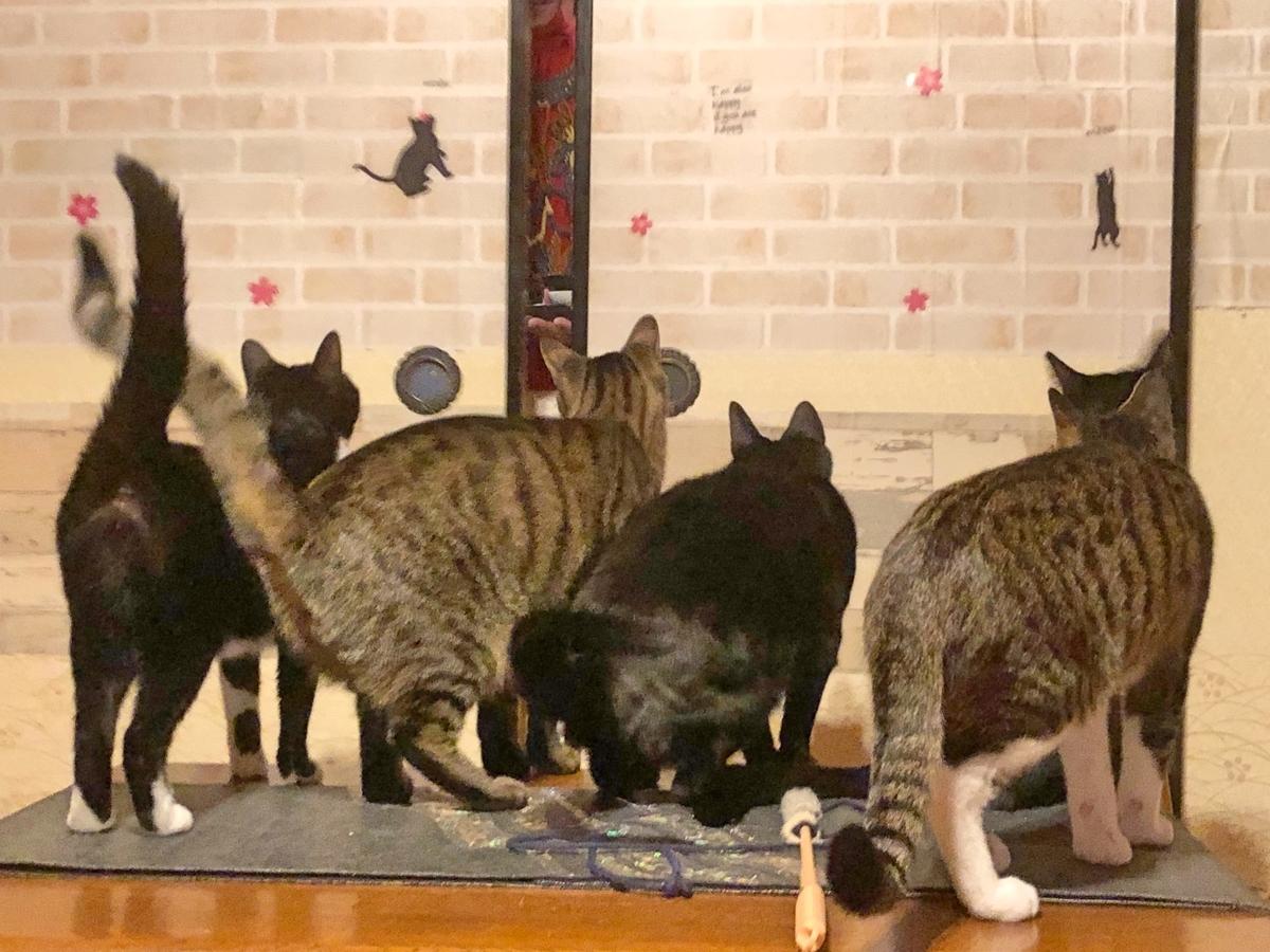 4匹の猫のイメージ