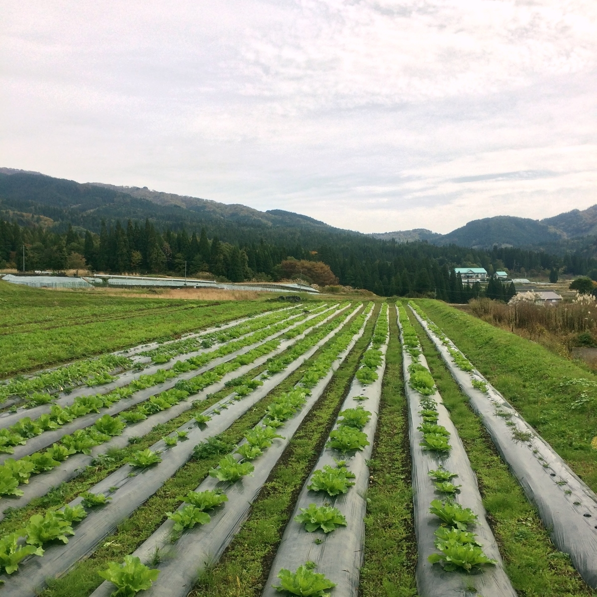 里山の畑のイメージ