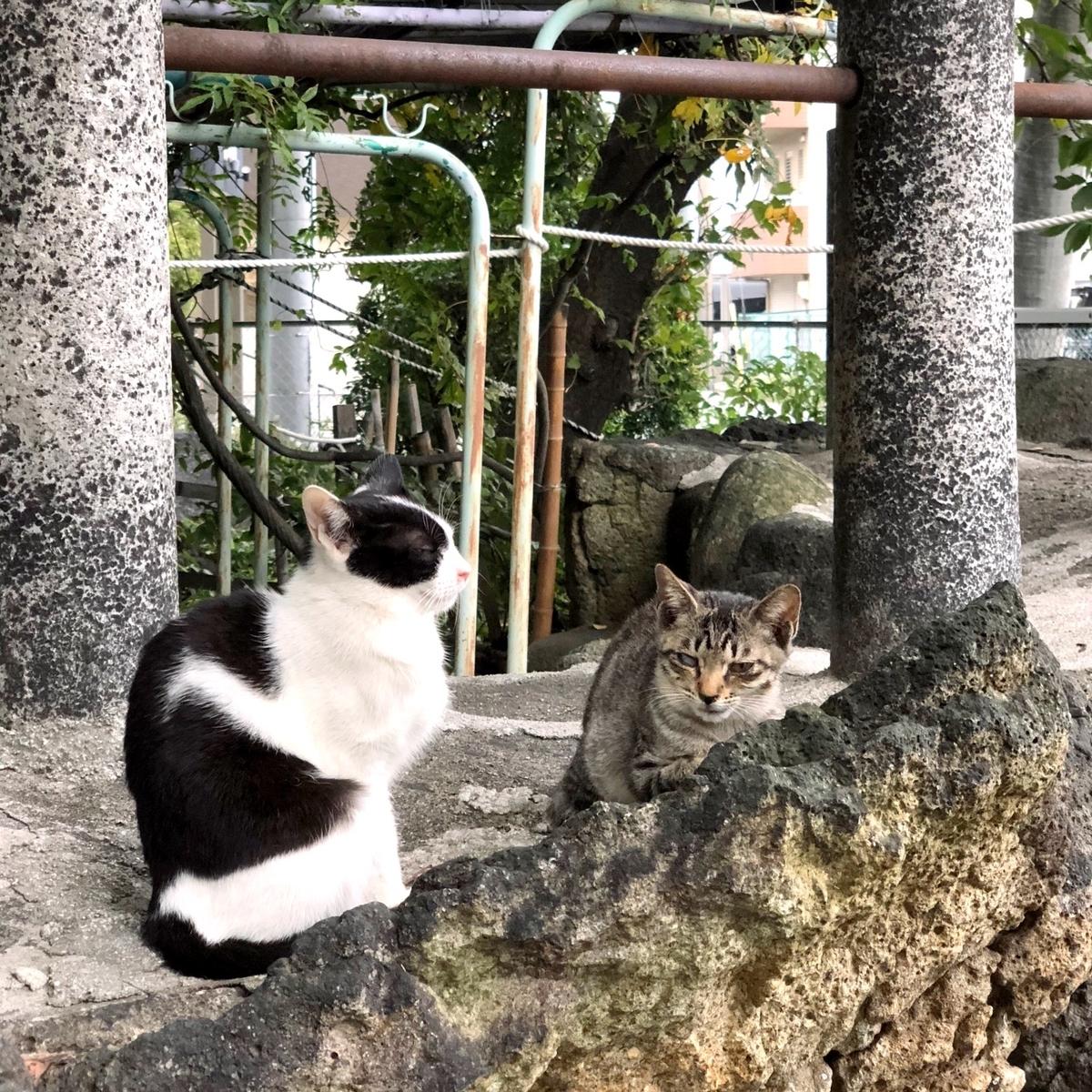 難しい関係の2匹の猫イメージ