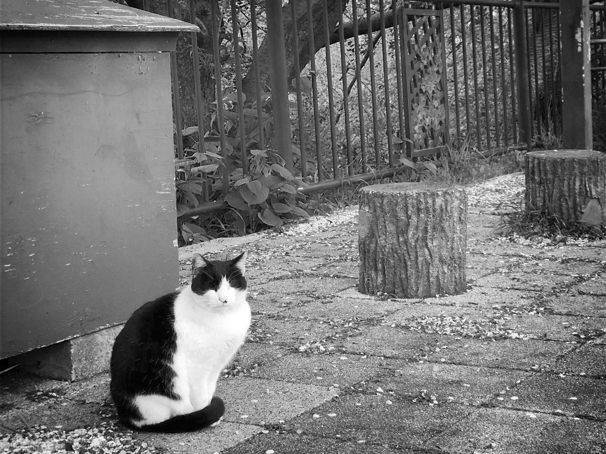 川沿いにたたずむ猫 image