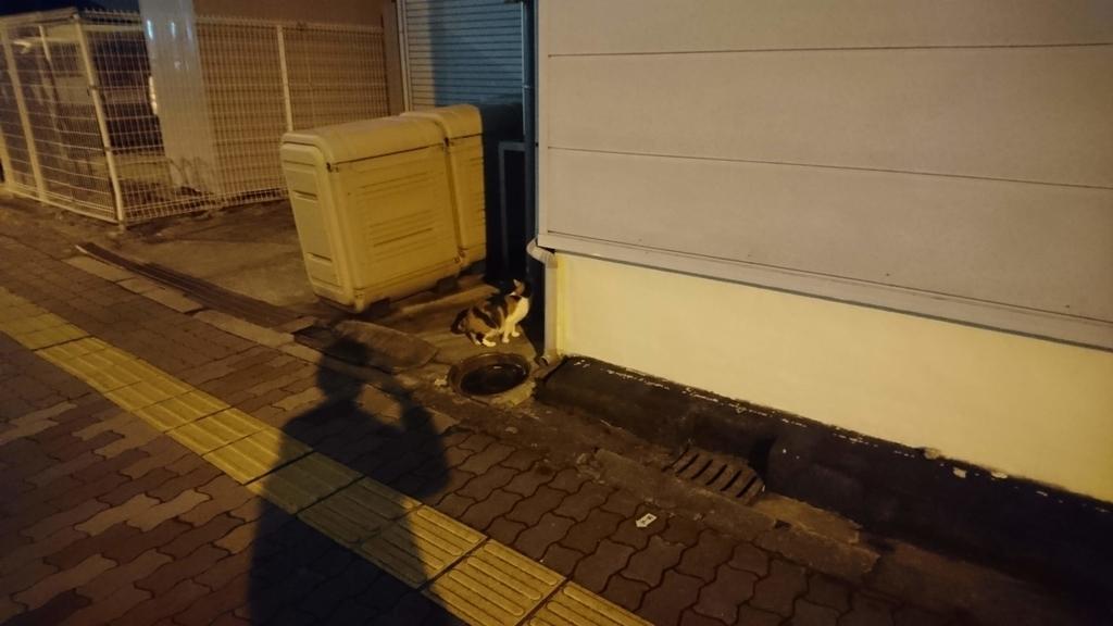 f:id:nichijo-ni-ikiru:20190312033755j:plain