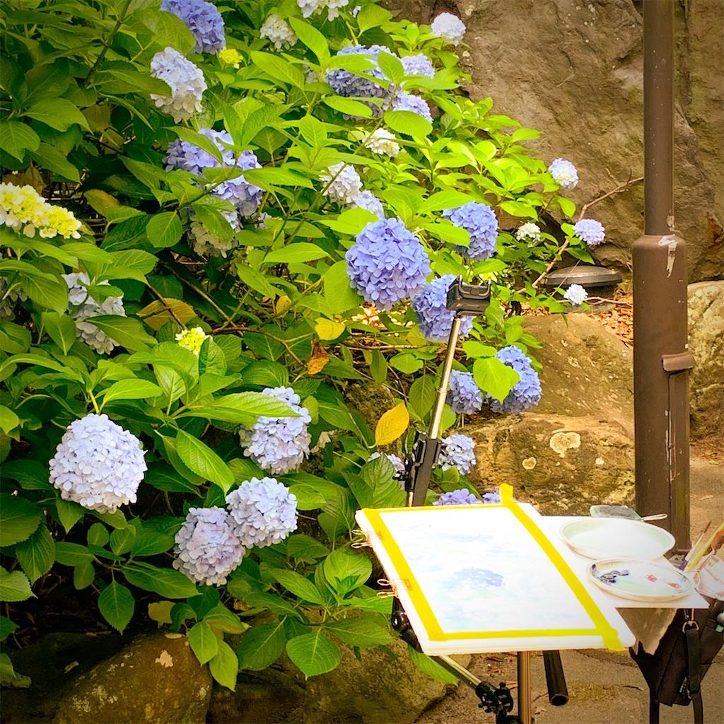 鶴見緑地にて紫陽花を水彩でスケッチ