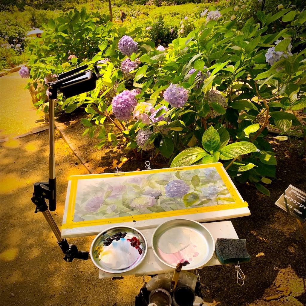 長居植物園にて紫陽花を水彩でスケッチ