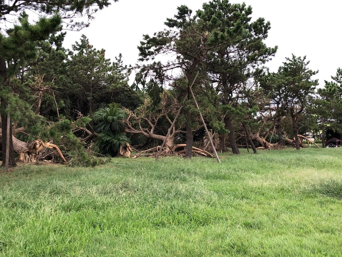 城南島海浜公園 倒木 台風