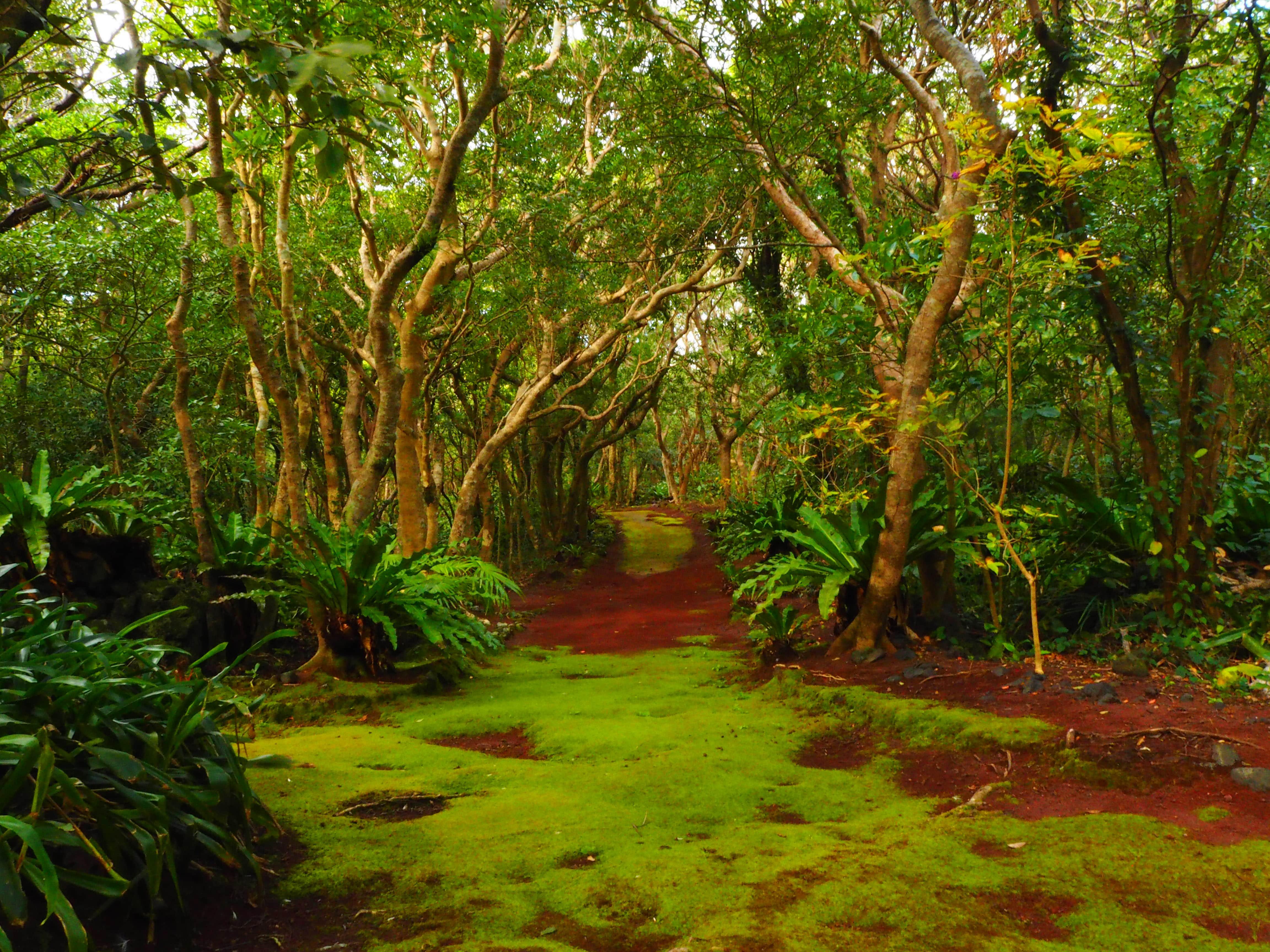 八丈島植物公園 八丈島