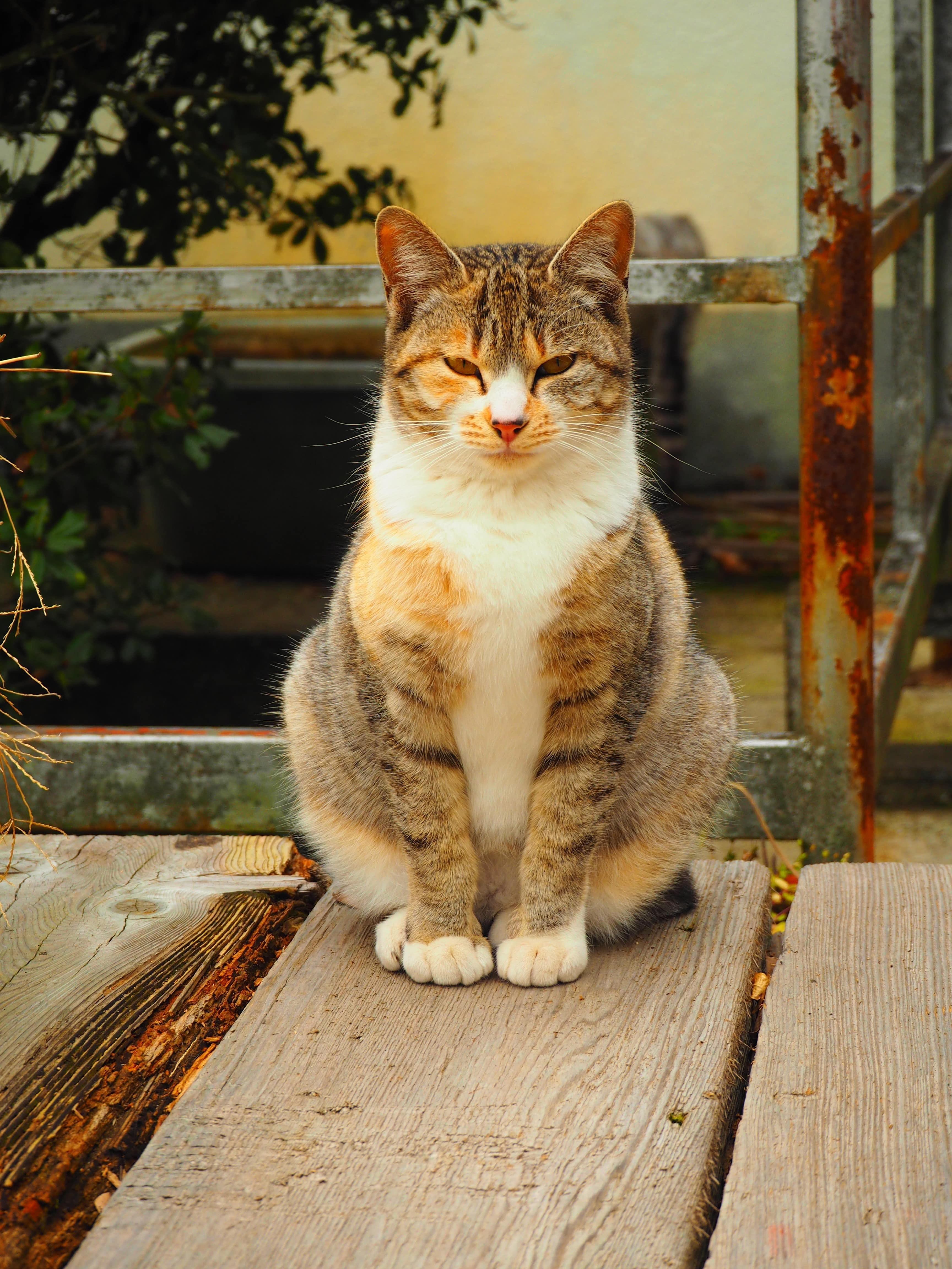 奥之院 笠ヶ瀧寺 縁結び 小豆島 猫
