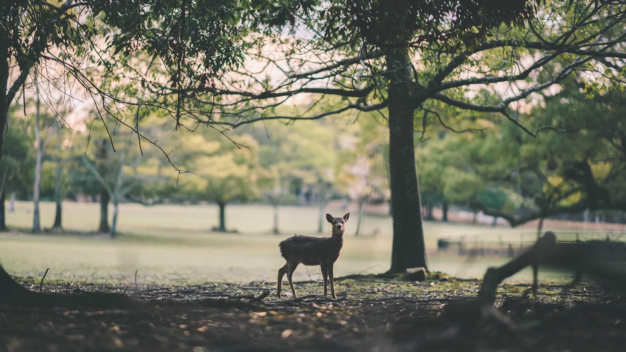 【奈良】Z と古都を歩く。〜お寺と鹿さんに会いに〜
