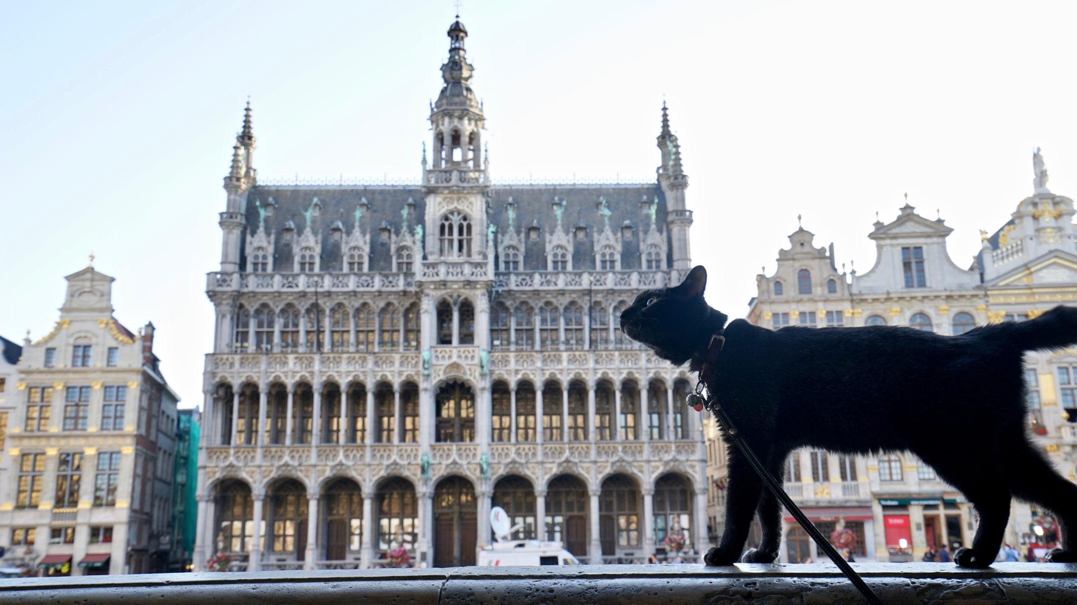 猫と世界旅行!?黒猫と飼い主がたどり着いた、旅と写真のライフスタイル