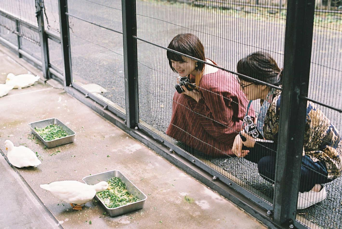 フィルムカメラを手に動物園フォトさんぽ!かわいさを引き出す動物園撮影のコツ