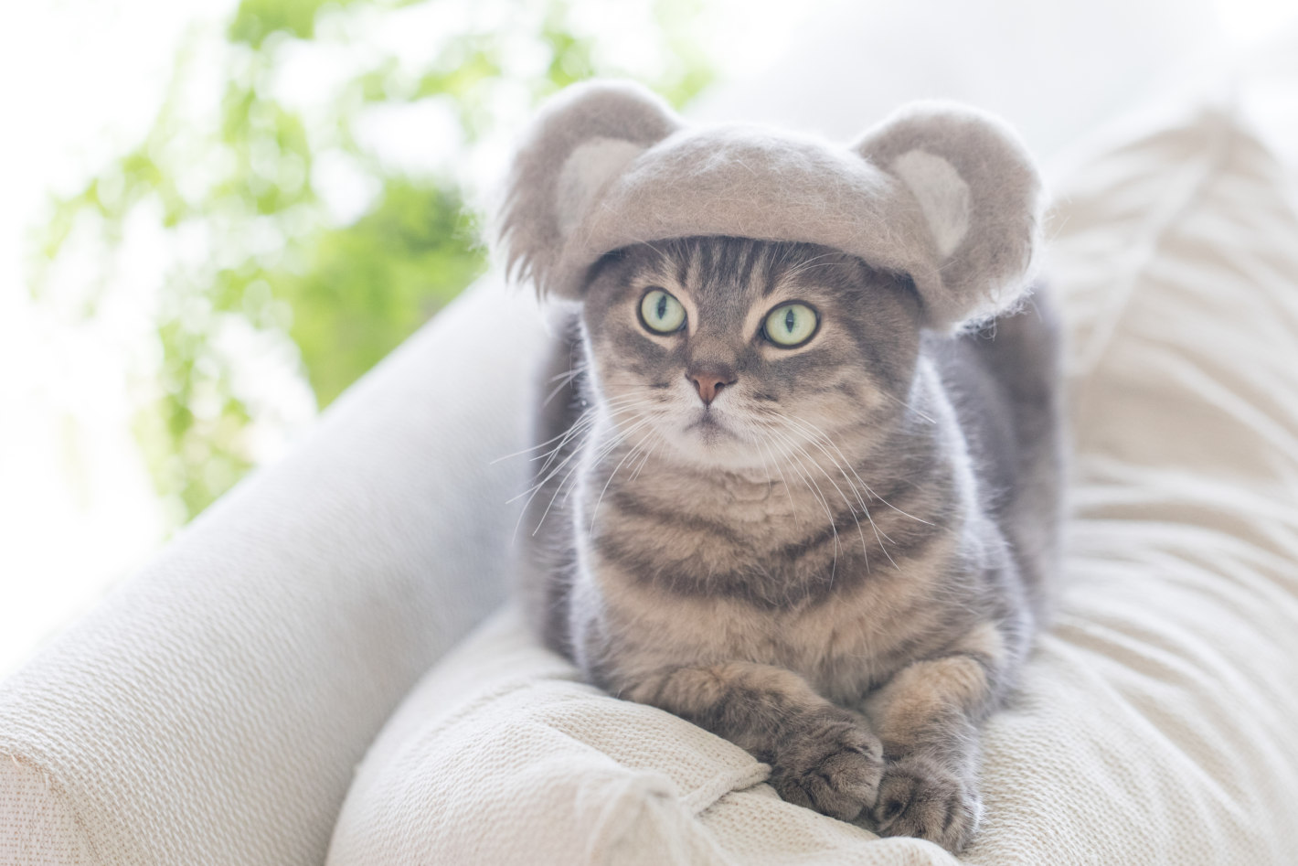 抜け毛帽子とは?