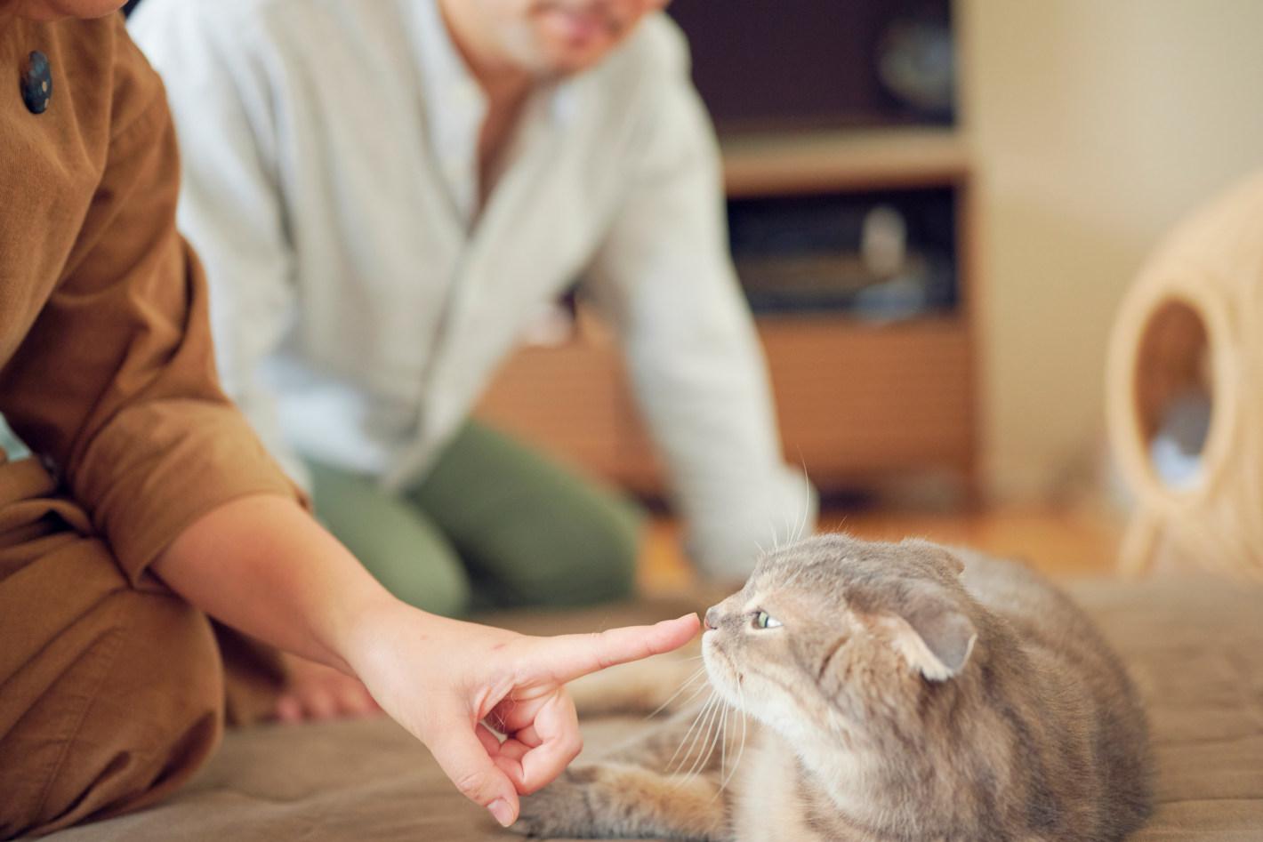 犬と暮らすはずが愛猫フォトグラファーに!?猫にはまった夫婦のフォトライフ