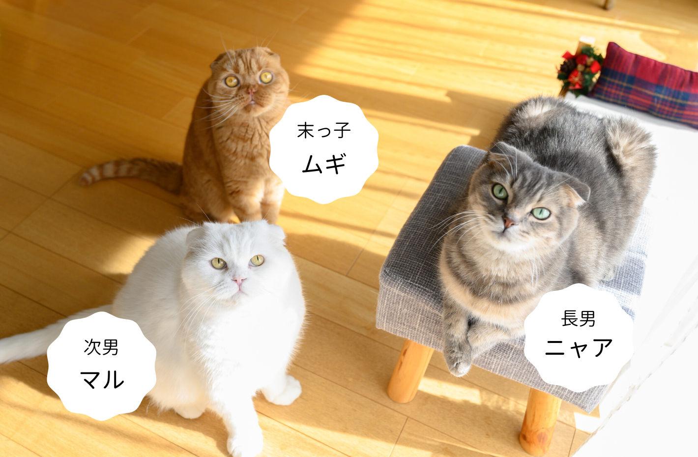 3匹の愛猫たち