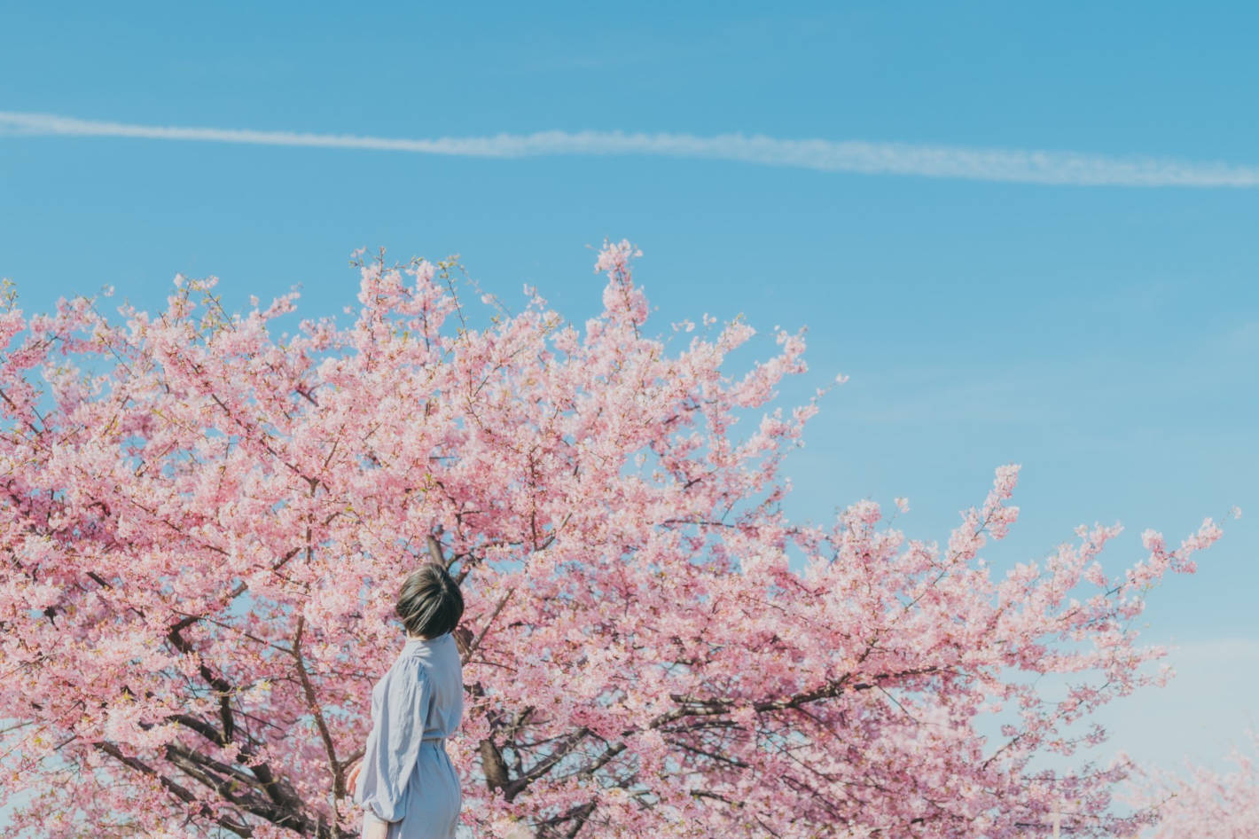 photo by MASAKIさん