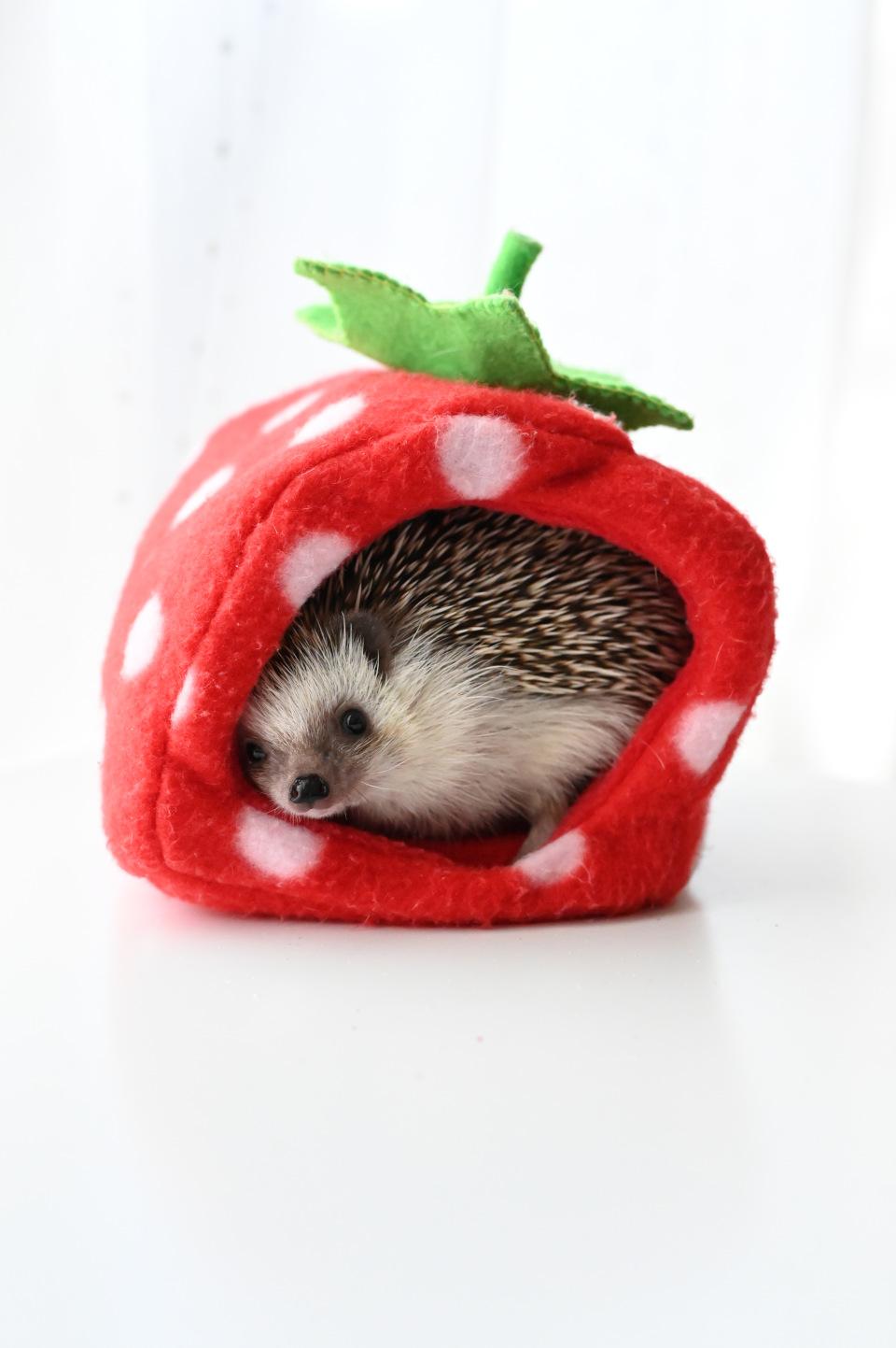 イチゴくん