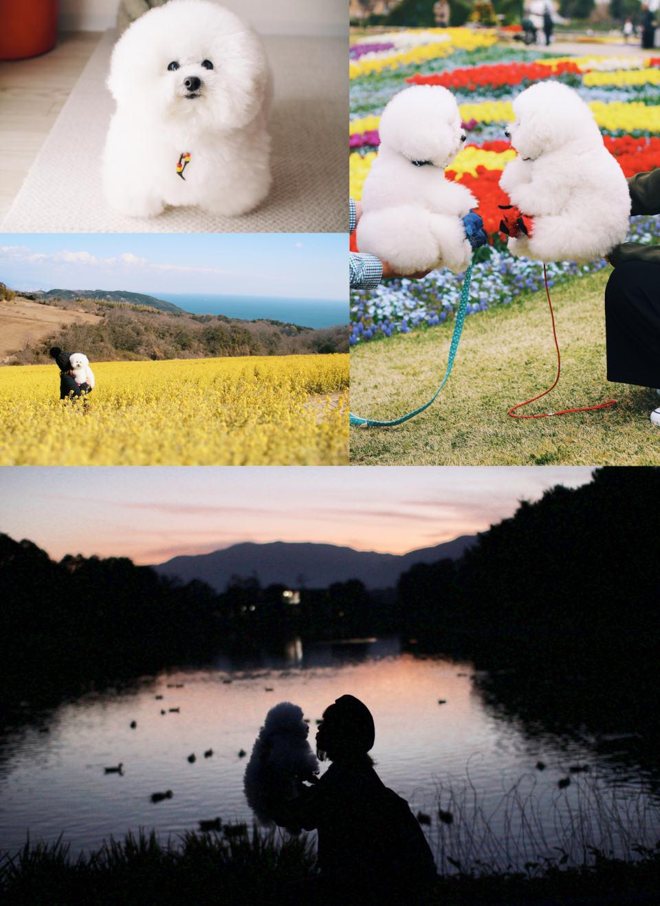 ふわモフ胸きゅん!愛犬と一緒に写真撮影を楽しむ秘訣