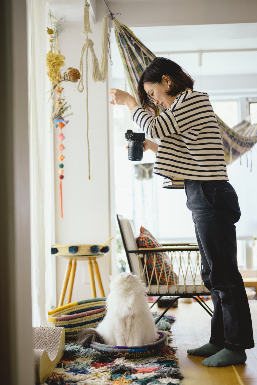 自宅で猫をかわいく撮りたい!プロが教える、魅力を引き出す猫ポートレート