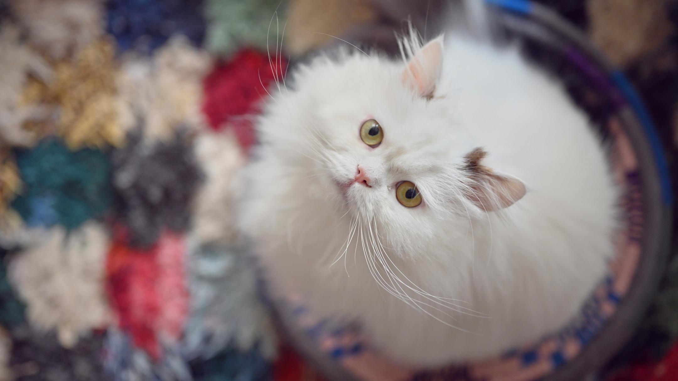 自宅でかわいく撮りたい!プロが教える、魅力を引き出す猫ポートレート