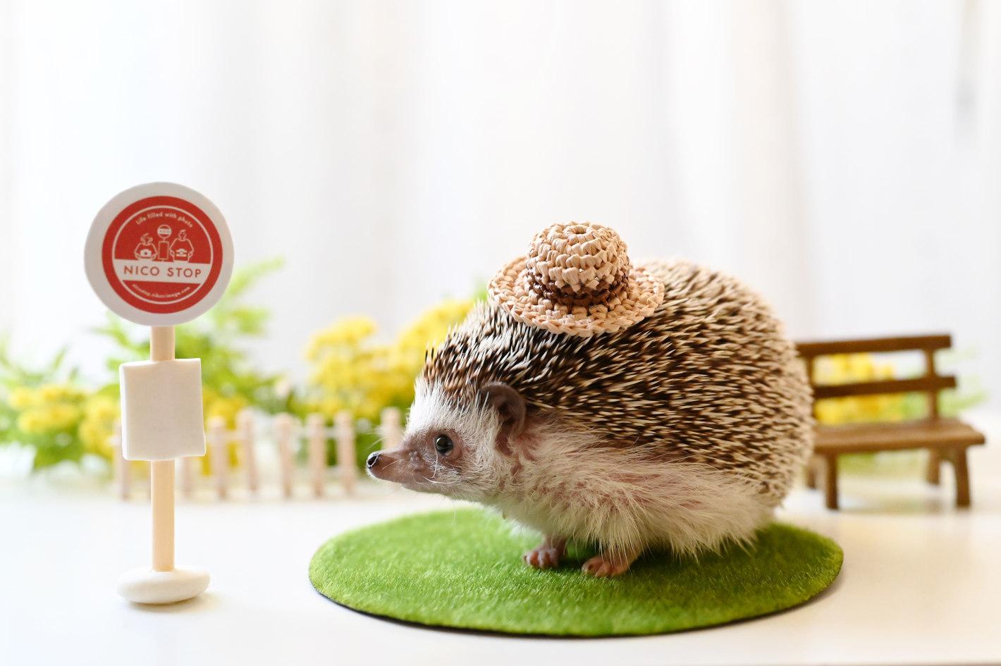 Model:イチゴ