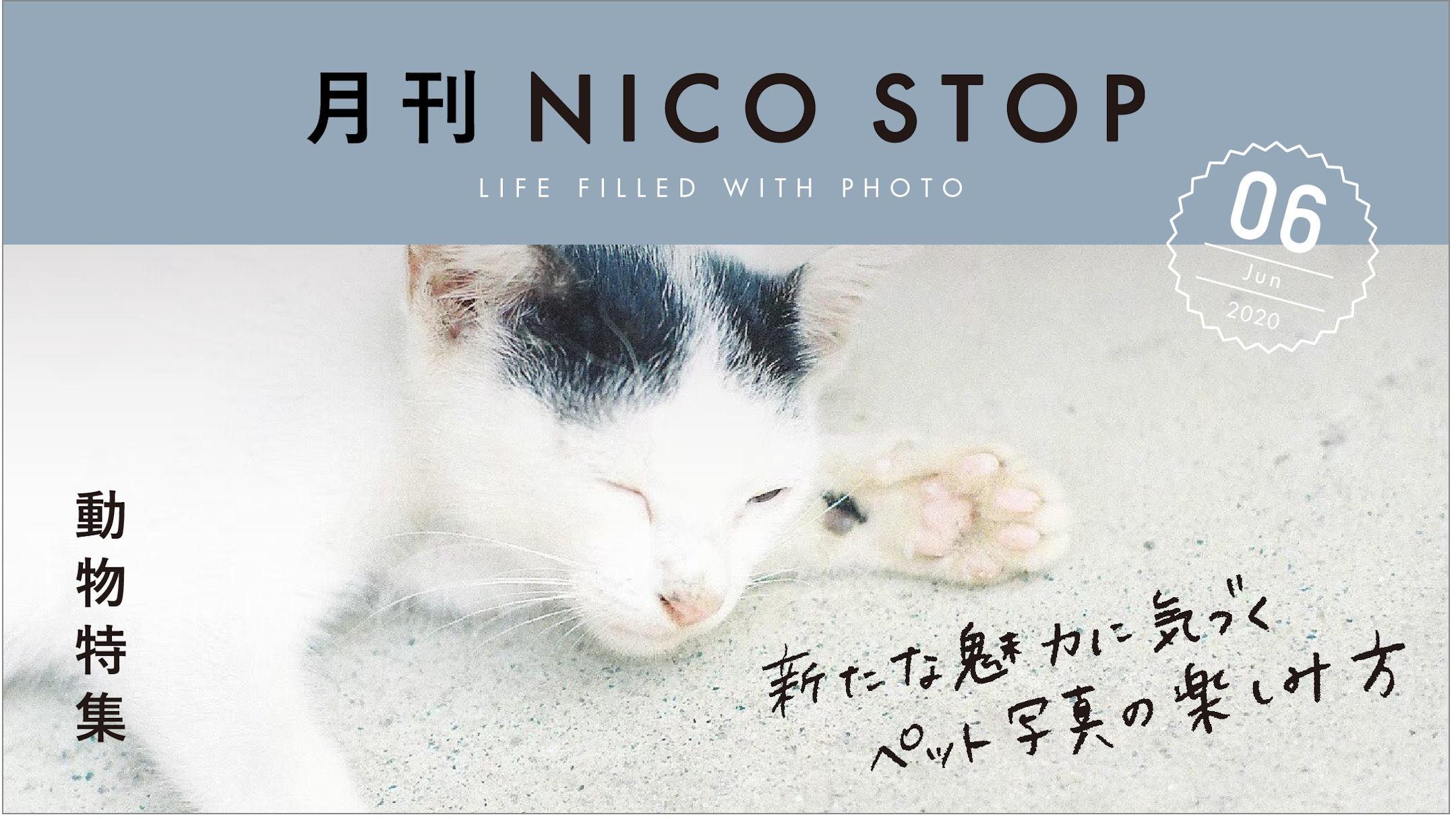 月刊NICO STOP 6月号【動物特集】新たな魅力に気づくペット写真の楽しみ方