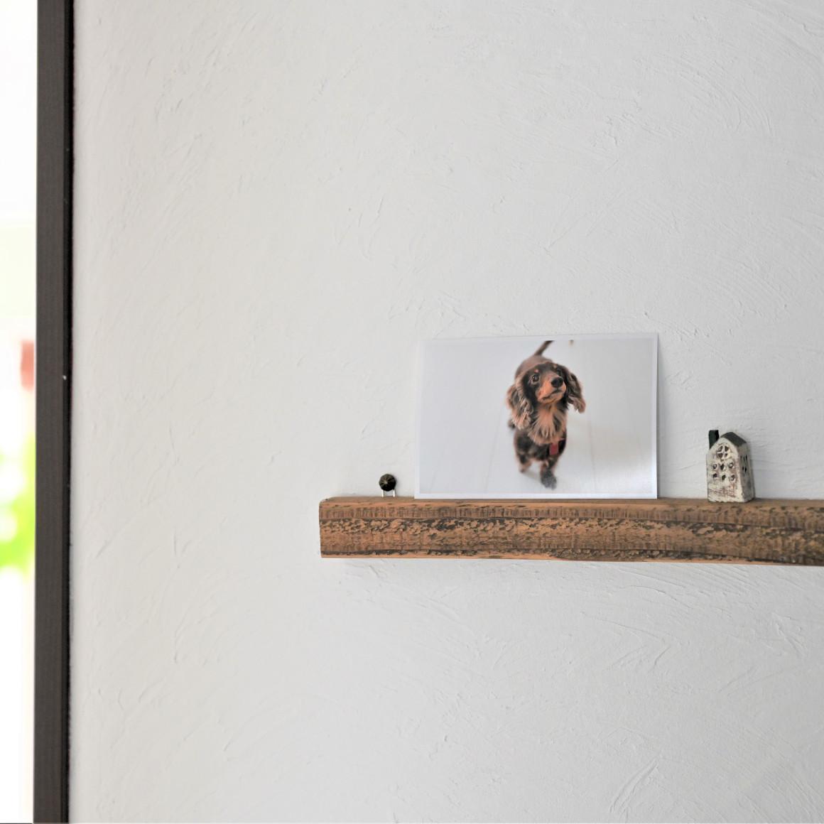 元雑貨屋さんが教える、ペット写真のおしゃれな飾り方8選