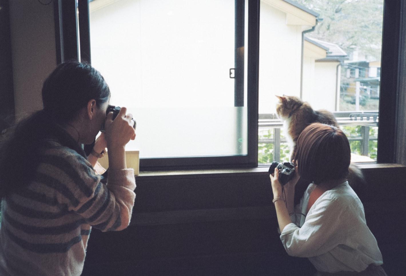 猫カフェではじめてのフィルム撮影 - 古民家風の保護猫カフェ「鎌倉ねこの間」