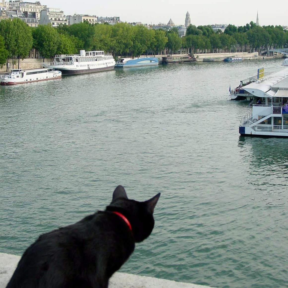 猫と世界旅行!?黒猫ノロと飼い主がたどり着いた、旅と写真のライフスタイル