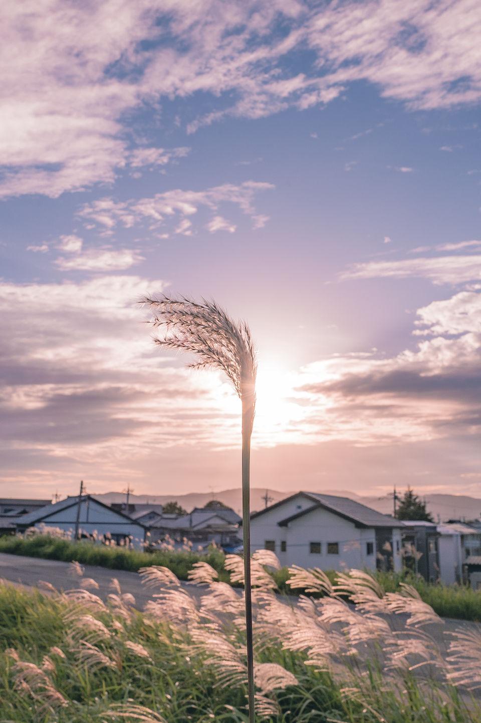 日本の四季を届けるフォトレター – 秋の「季語」に想いを馳せて by Akine Coco