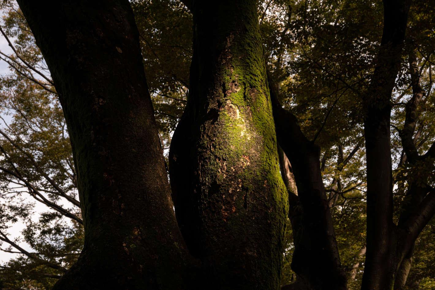 Z 50、NIKKOR Z DX 16-50mm f/3.5-6.3 VR/photo by Ken Tanahashi